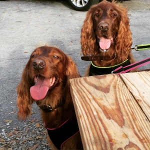 Dog Friendly Beach Box Cafe